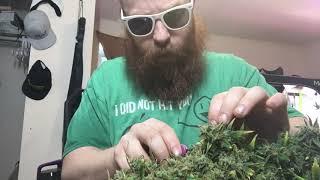 100% organic pesticide free medical marijuana indoor grow Day 55-60 by Phat Robs Oils