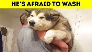 Video Photos Showing That Dogs Are All Still Puppies On The Inside 「 funny photos 」 MP3, 3GP, MP4, WEBM, AVI, FLV November 2018