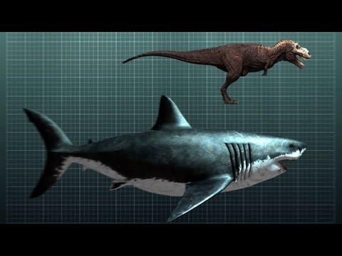 The Nightmarish Megalodon | Sharkzilla -- Shark Week