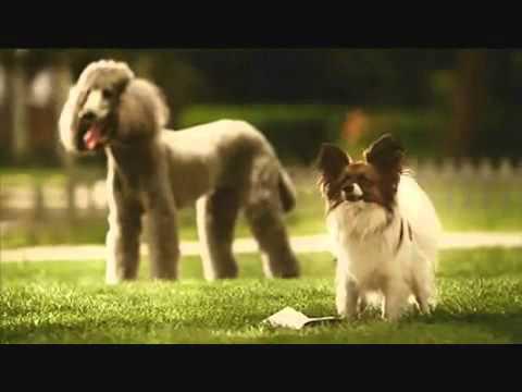 Sexy Dog Jaw Dropper Ad ♥.mp4