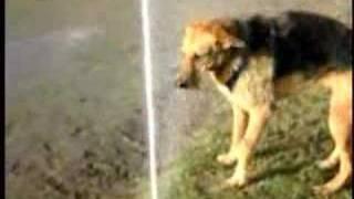 Louis CK's stupid dog