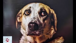 Eyes Behind Bars | Portaits of shelter dogs by The Orphan Pet
