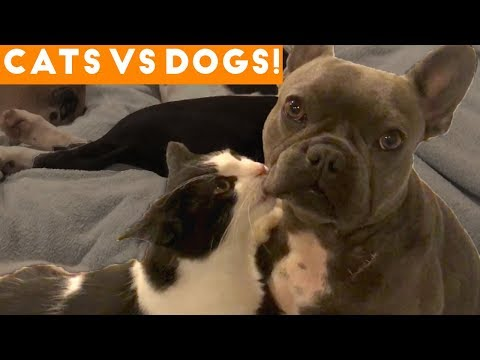 The Cutest Dogs Vs. Cats Compilation 2018| Funny Pet Videos