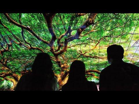 Technikmesse IFA in Berlin: Aufrollbare Fernseher und ...