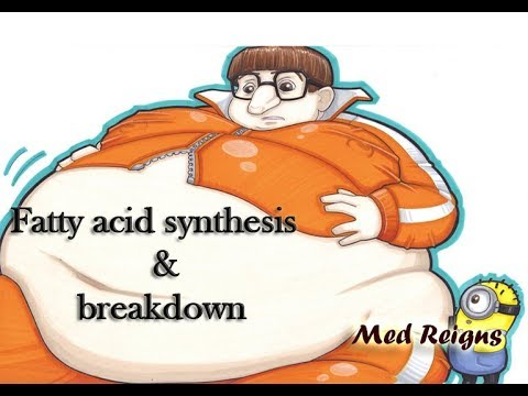 "Fatty Acid Synthesis And Breakdown ""Med Reigns"""