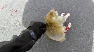 Video BIKER TRYING TO HELP DYING ANIMAL | BIKERS ARE NICE | Bikers Helping People & Animals | [Ep.#17] MP3, 3GP, MP4, WEBM, AVI, FLV Februari 2019