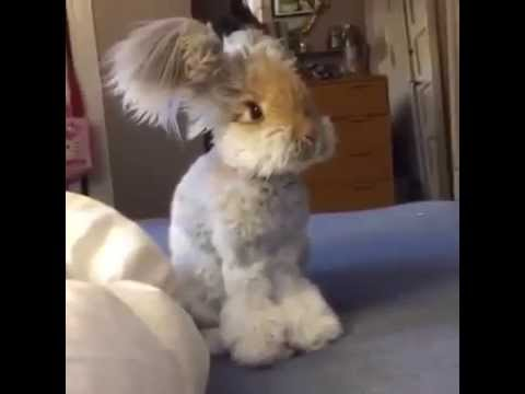 wally: il coniglio che tutti vorrebbero!