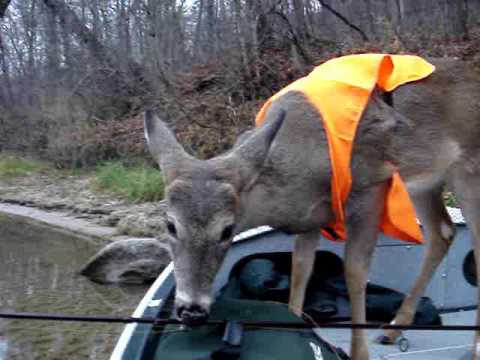 Fishing in northern Michigan when suddenly a deer...wearing a vest is spotted....