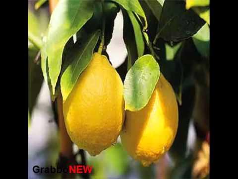 il limone e le sue proprietà antitumorali,antidepressive,antimicrobiche