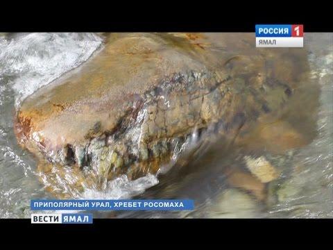 Научная сенсация на Ямале (видео)