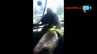 VIDEO DNE: Umí váš kocour pozdravit?