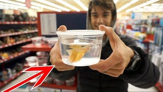 GETTING A ROSE GOLD BETTA FISH!! by  Challenge the Wild