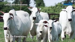 02 - LEILÃO VIRTUAL DO ADIR E PARCEIROS - 12/02/2019 - 21H