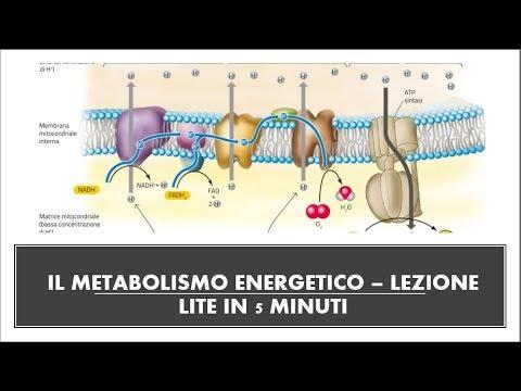 Glicolisi, ciclo di Krebs, Fermentazione -video RIASSUNTIVO