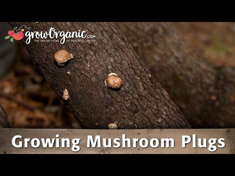 Mushroom Plugs