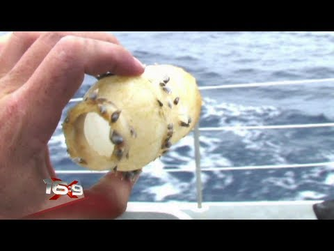16x9 - Garbage patch in the middle of the ocean (видео)