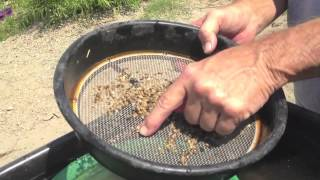 GOLD MINING THE KERN RIVER
