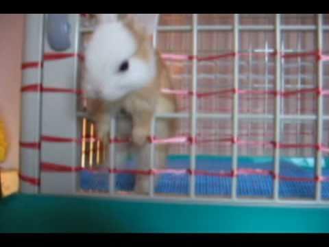 超可愛監獄兔逃脫計,誰可以把牠瘦!?