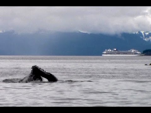 Icy Strait Point Alaska Humpback Whale