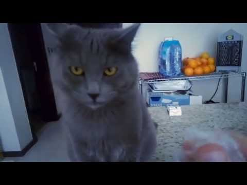 This cat malfunctions when you crinkle a specific type of plastic