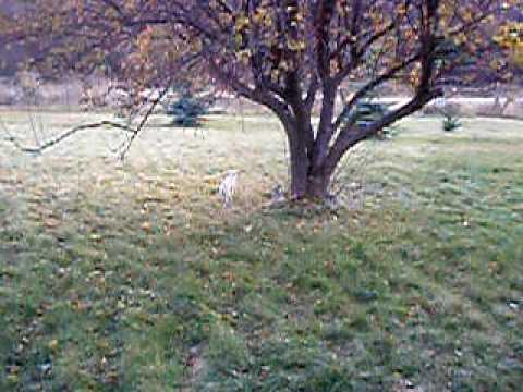 Puppies & Deer