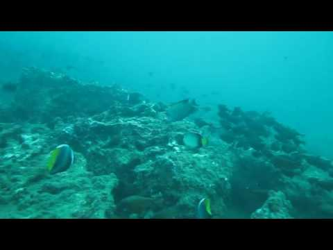 Fish fish fish in Negombo! Great scuba diving with Taprobane Divers!