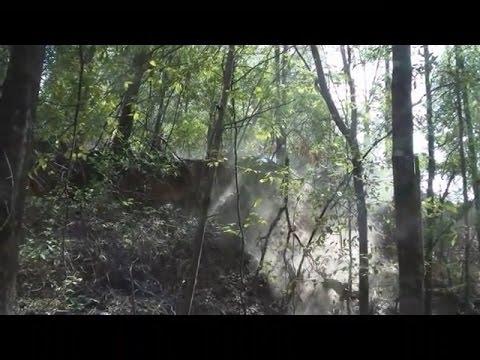 Đi vào khu rừng thế này bạn có cảm thấy lạnh gáy không.