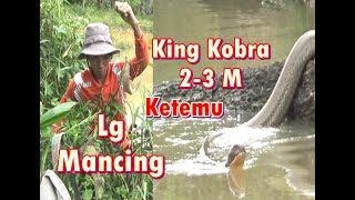 Video Lagi mancing ikan, malah ketemu si Raja ular alias king kobra MP3, 3GP, MP4, WEBM, AVI, FLV Mei 2019