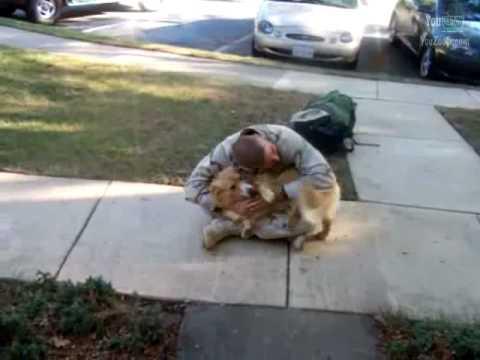 festeggiamento del cane dopo il ritorno del padrone dall'afghanistan