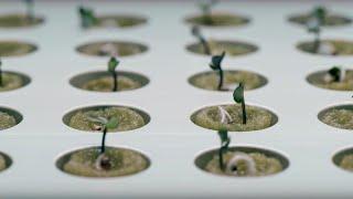 Jardín hidropónico de IKEA combina agricultura con muebles de decoración