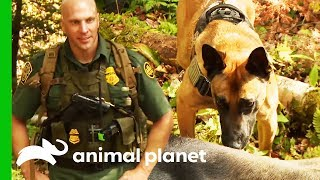Searching For A Wounded Moose Which Crossed The Canadian Border | North Woods Law by Animal Planet