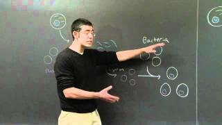 Genomic And CDNA Libraries | MIT 7.01SC Fundamentals Of Biology