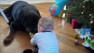 Baby Jaylon Playing Ball With Chopper, His 150lb Rottweiler