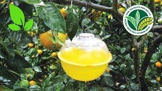 Bẫy dẫn dụ: Biện pháp loại trừ côn trùng an toàn