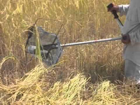 รถเกี่ยวข้าวมือสอง - เป็นการเกี่ยวข้าวด้วยเครื่องตัดหญ้าที่เร็วและประหยัดมาก ๆที่นาผู้ใหญ่ หมู่ 12 ต สะกาด อ....