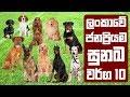 ලංකාවේ ජනප්රියම සුනඛ වර්ග 10 | Most Popular Dog Breeds in Sri Lanka