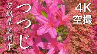 【絶景茨城】つつじ[4K]茨城県笠間市|VISIT IBARAKI, JAPAN