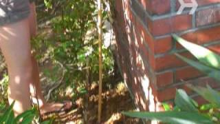Watch more Gardening Tips videos: http://www.howcast.com/videos/206042-How-to-Train-a-Vine Vines create the perfect look...