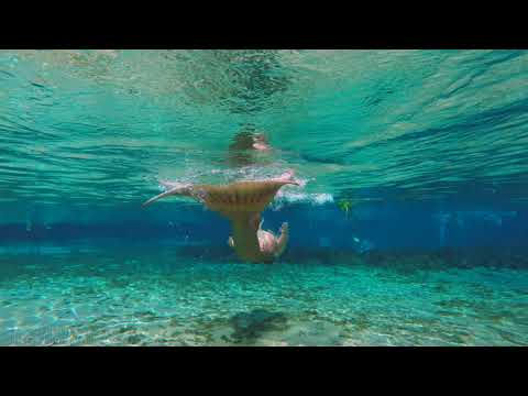 Follow The Golden Tailed Mermaid видео