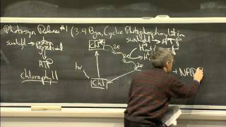 Photosynthesis | MIT 7.01SC Fundamentals Of Biology