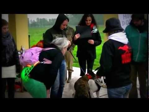Gaci, l'associazione che salva i levrieri