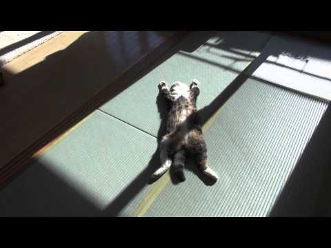Även katter kan uppskatta en stund i solen