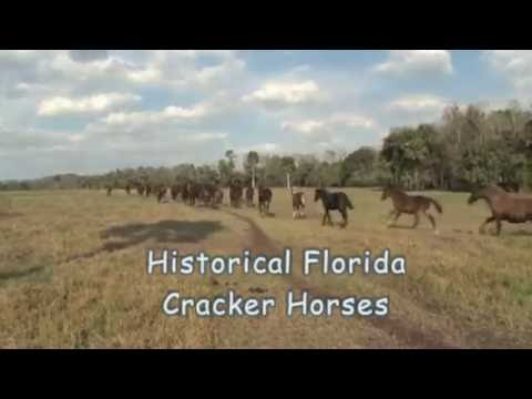 Horseback Creek Trail