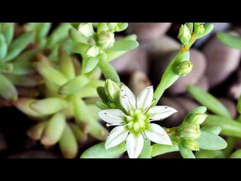 piante grasse: come proteggerle dalle malattie più frequenti