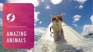 Ce chat borgne aime l'eau et pratique le surf à Hawaï.