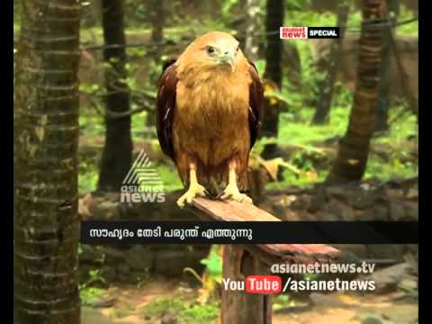 Friendly Eagle | Asianet News Special