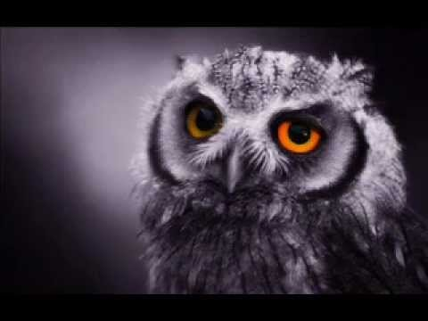 The Night Owls  (Little River Band)