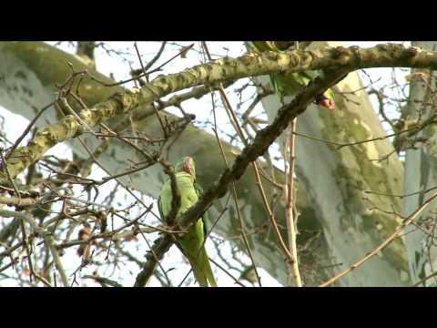 Papageien erobern Deutschland