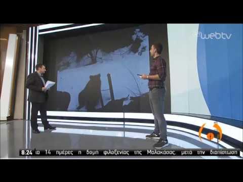 Εισβολή αρκούδας σε αυλή σπιτιού στη Φλώρινα! | 06/04/2020 | ΕΡΤ