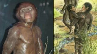 Lucy the Australopithecus Debunked in 11 Minutes